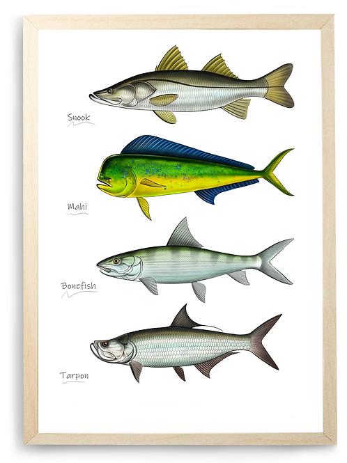 Saltwater Gamefish Half/Chart - Print