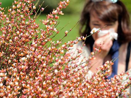 Terminologia delle patologie allergiche