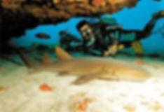 Mergulhos com Incríveis Destinos Nacionais