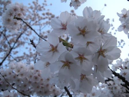 春めいてきましたね 🌸
