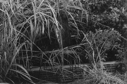 Mini Jungle.JPG