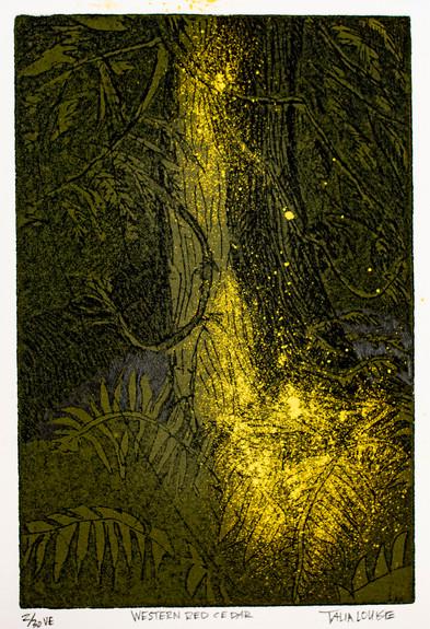 Western Red Cedar, 2020, intaglio ink etching on cotton rag paper, 4x 6