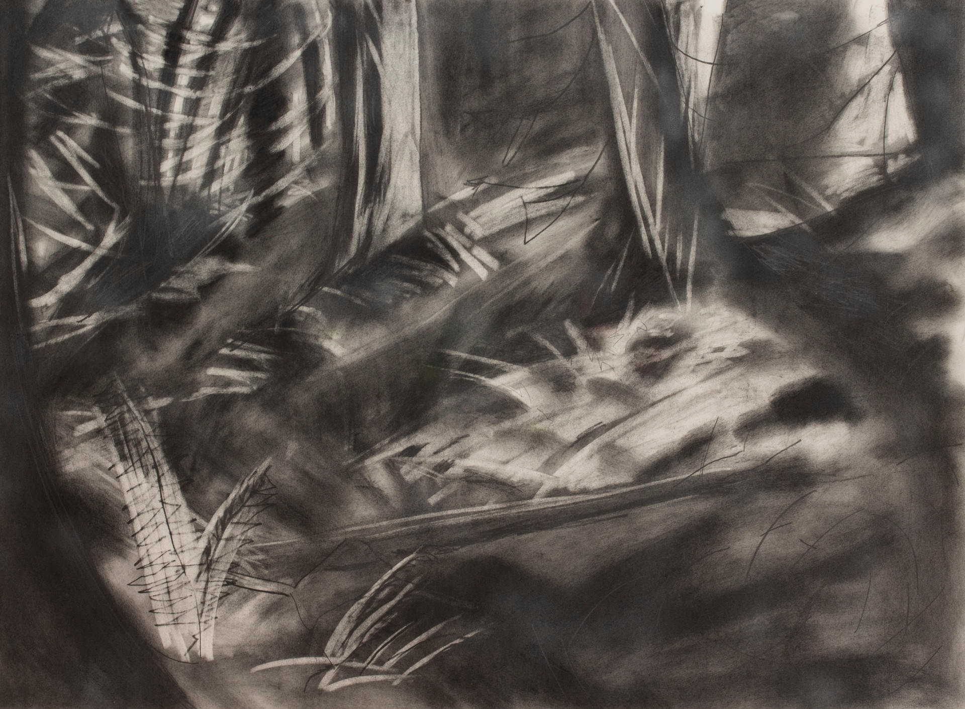 Forest 1, 2019, graphite on paper, 30x 22