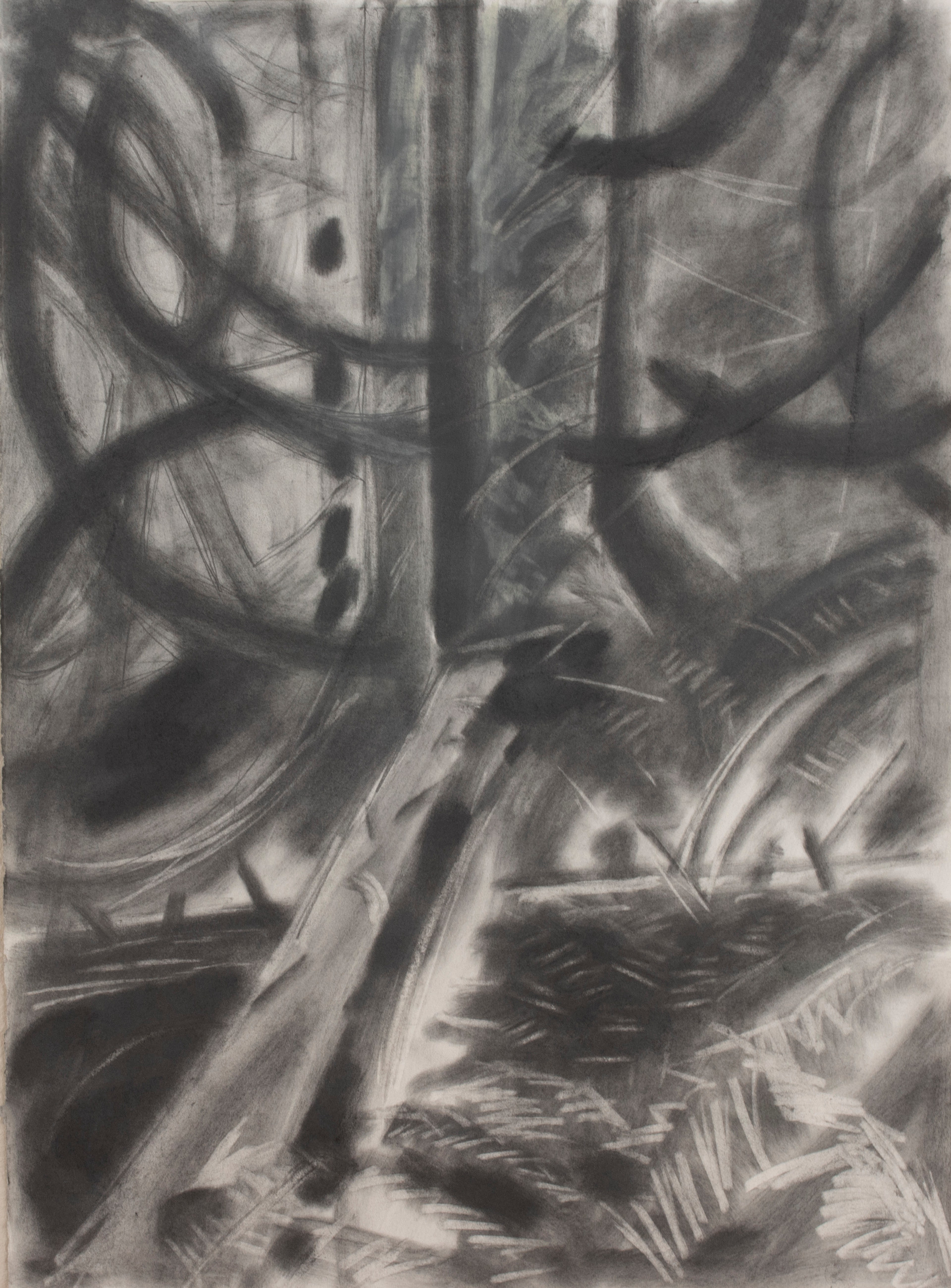 Forest 2, 2019, graphite on paper, 30x 22