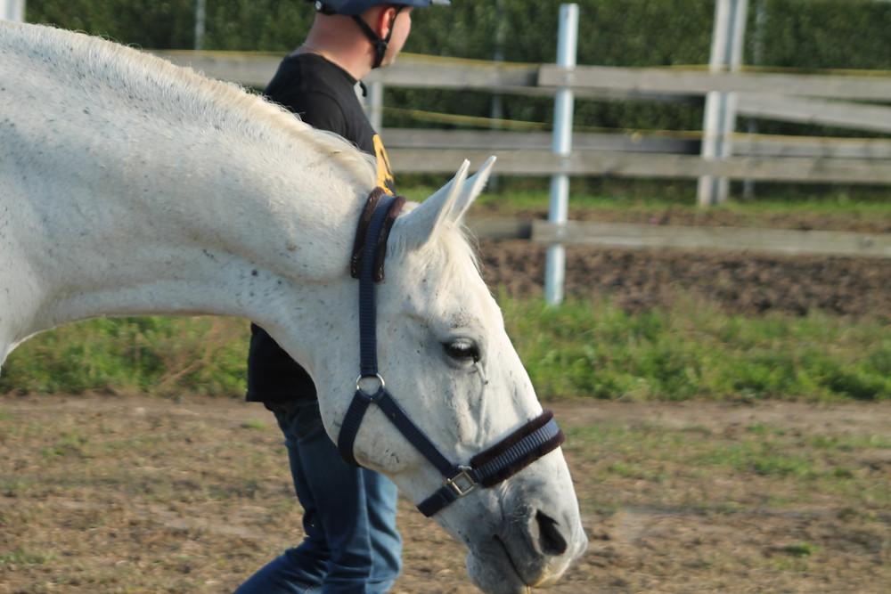 Signali opuštanja kod konja na fotografiji su niski položaju glave i vrata, ispuhivanje zraka iz nozdrva, opušten pogled. Magic i Marko na radionici o upotrebi rekvizita.
