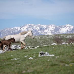 Put na Bile- planine su dom, a konji slobodni