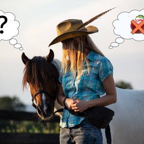 Uvod u kliker trening konja