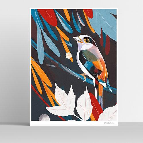 Silver-breasted Broadbill Poster 31x41 cm
