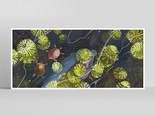 Turtles Poster 30x70cm