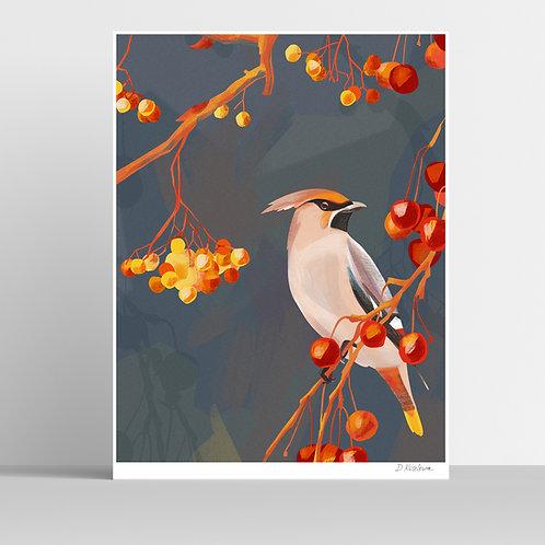 Waxwing Bird Poster 31x41 cm