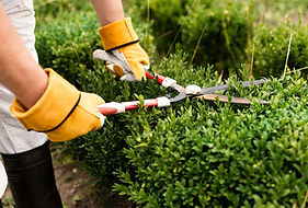Hedging,-Mowing,-Clipping,-Bushes.jpg