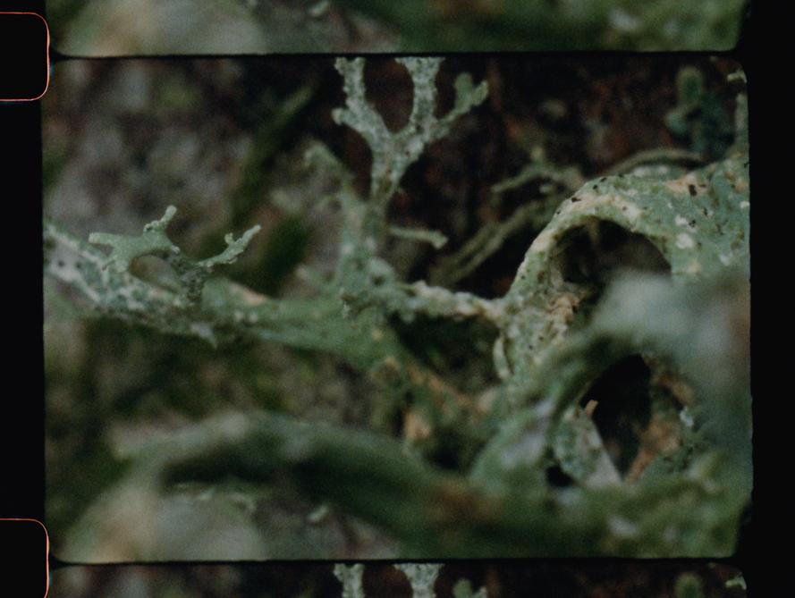 castorocene-lichen-macro-1.png