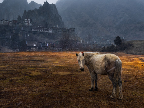 Annapurna Valley, Népal
