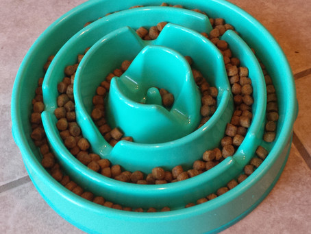 Product Review: Drop Slo-Bowl Slow Feeder