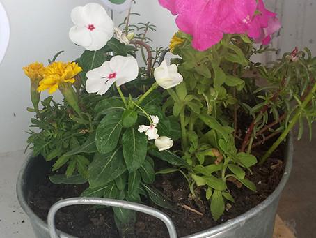 DIY Galvanized Tub Garden