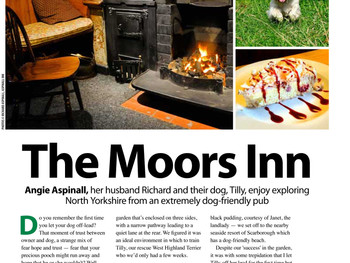 Dog-friendly in North Yorkshire