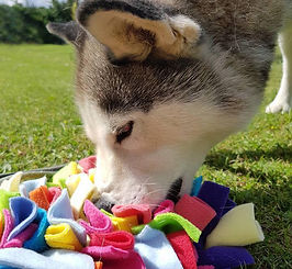 Enrichment toy for dogs