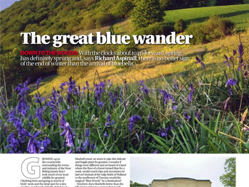 It's all about the Bluebells