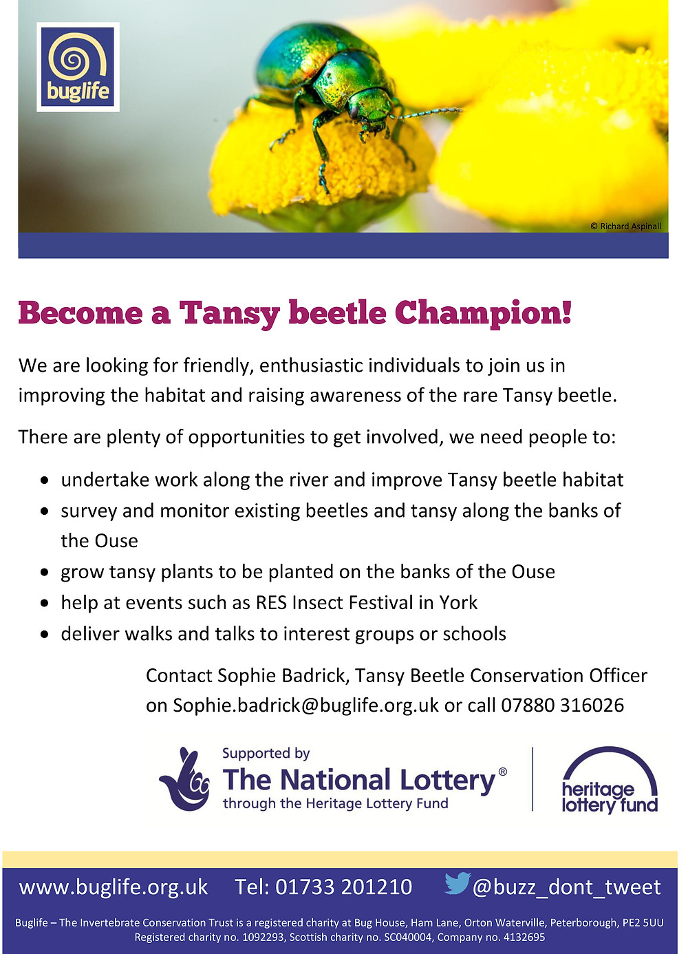 150611 Tansy beetle Champions poster.jpg