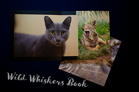 wild whiskers book image.png