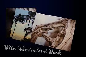 winter wonderland book image.png