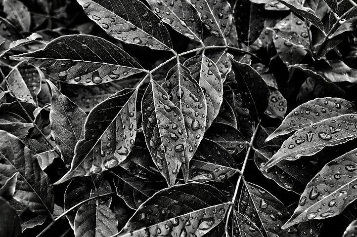 Dewdrops%20on%20leaves_edited.jpg