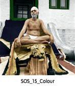 sos_43_colour.jpg