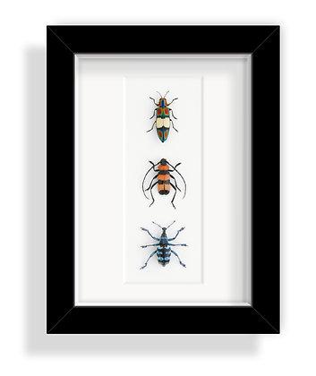Käfergruppe 3