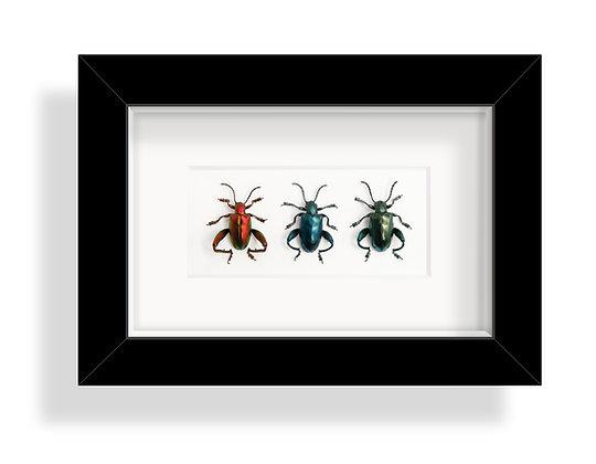 Froschbeiniger Blattkäfer