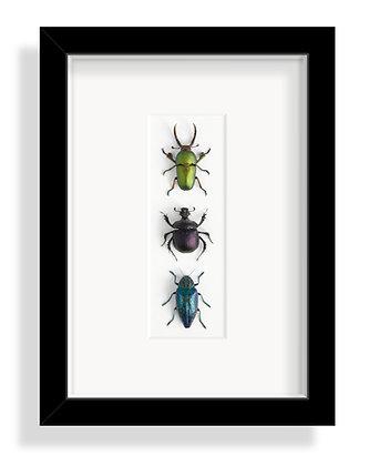Käfergruppe 1