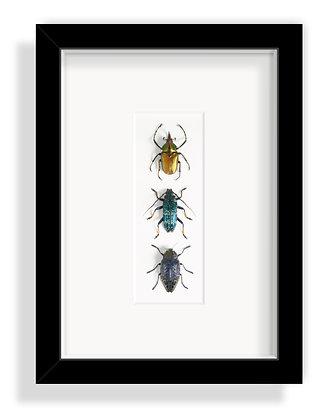 Käfergruppe 2