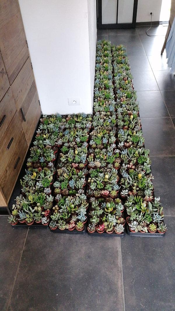 plantenverkoop 7.jpeg