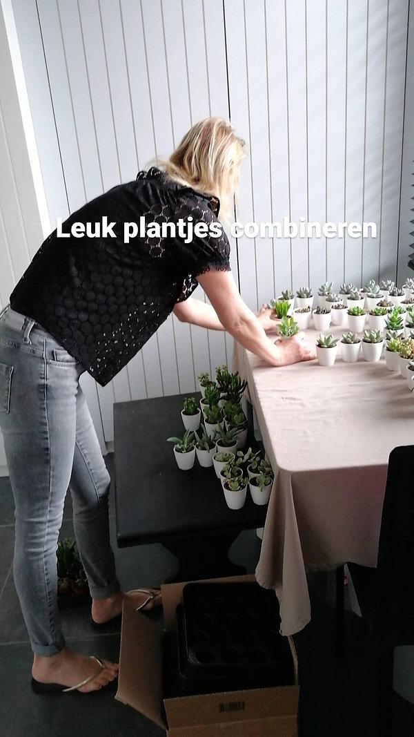 plante.jpeg