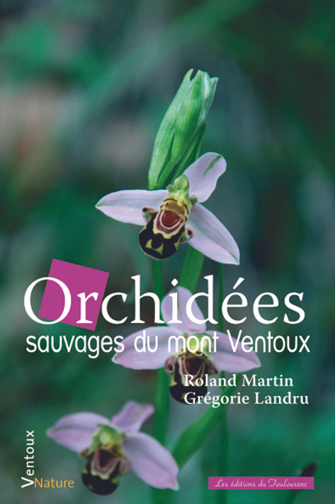 Orchidées sauvages du Ventoux