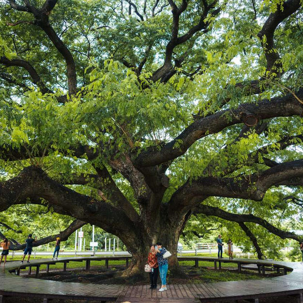 Visit the Giant Tree for some great pictures...