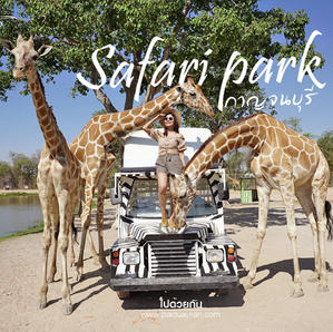Have fun feeding giraffes and other animals from your car at the Safari park...
