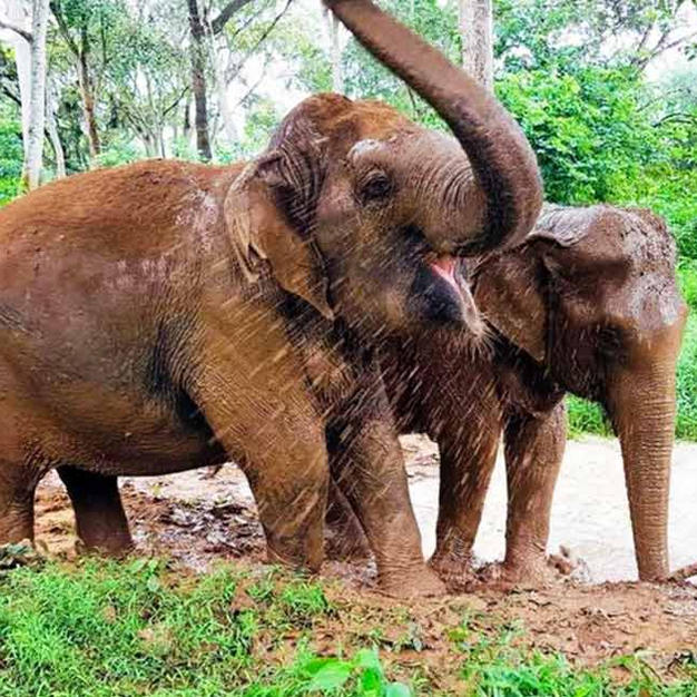 Have an unforgettable day at one of the Elephants Sanctuaries...