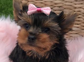 Little Miss Lillian still available!