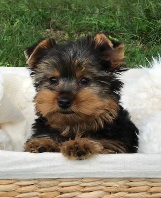 New puppies just posted!