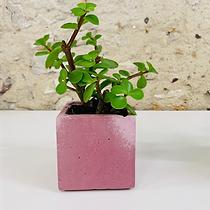 plante4.png