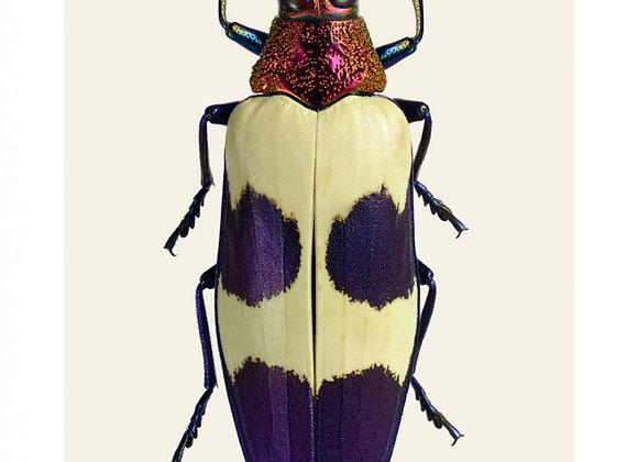 Affiche Insecte A4 encadrée. Impression de macrophotographie