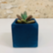 plante3.png
