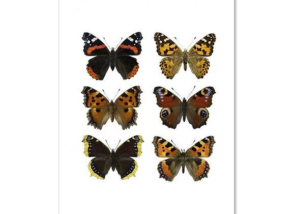 Carte postale papillon_ LILJEBERGS