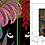 Thumbnail: Kakemono Caché