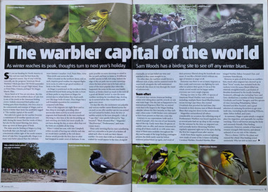 Warbler Article