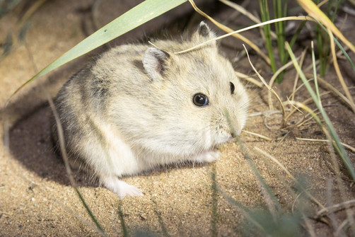 Cole's Hamster