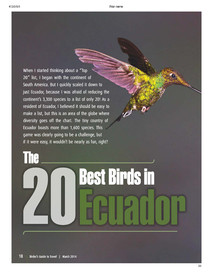 20 Best Birds of Ecuador