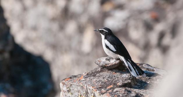 Angola Cave-Chat