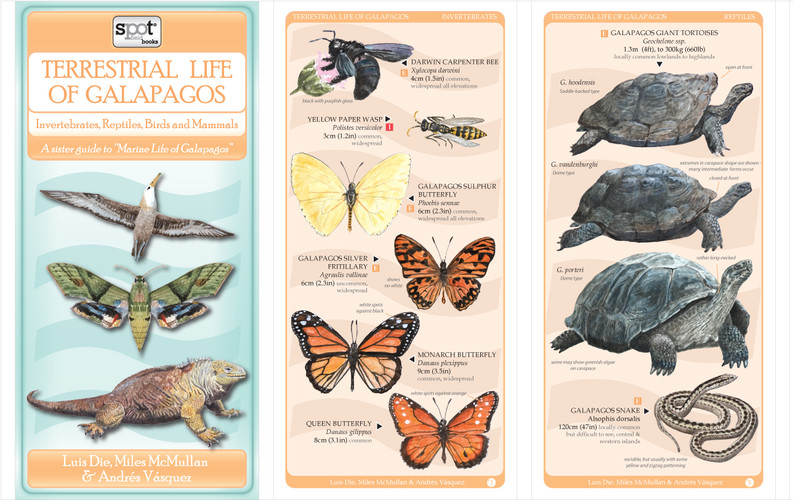 Terrestrial Life of the Galapagos