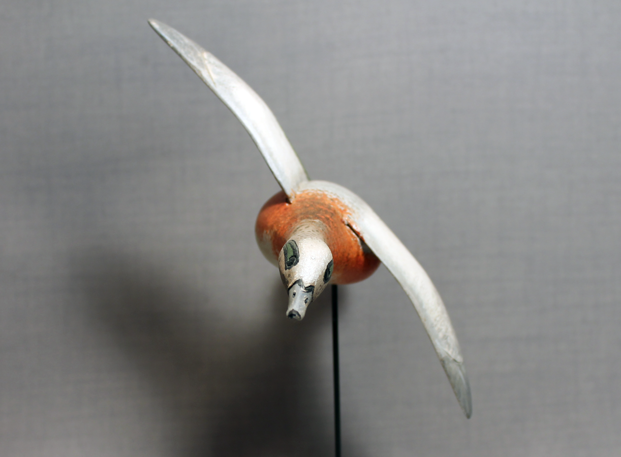 Wigeon Flying Mini - Museum Stand